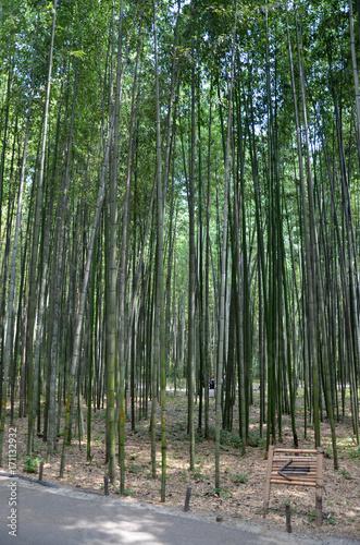 Aluminium Bamboe Kyoto - Foresta di Bambù