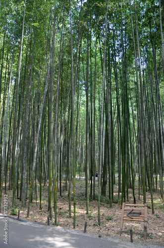 Fotobehang Bamboe Kyoto - Foresta di Bambù