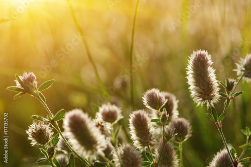 Foto op Plexiglas Gras field of spring flowers
