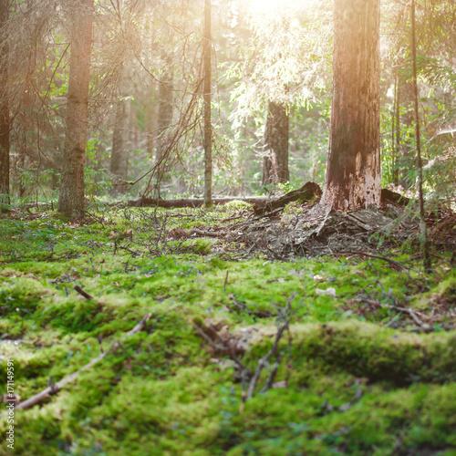 Fotobehang Natuur Ecology background outdoor landscape