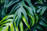 Tropical green leaves on dark background, nature summer forest plant concept