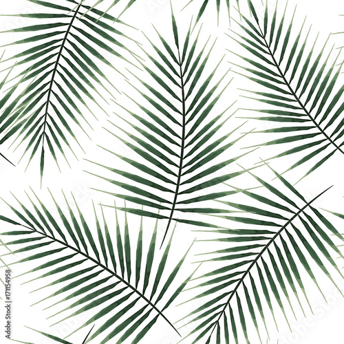 Seamless pattern of exotic palm trees. Green leaves on white background. Tropical leaf. - 171154958
