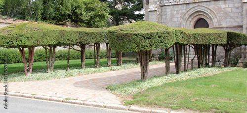Fotobehang Pistache taille des arbres