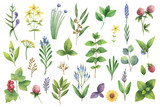 Hand drawn vector watercolor set of herbs and spices. - 171160902