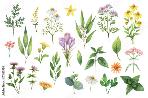 Hand drawn vector watercolor set of herbs and spices. - 171160936