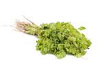 GreenCoriander - 171161331