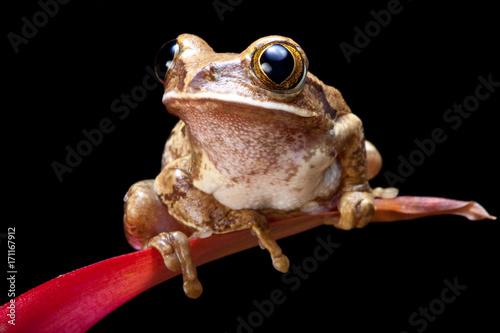 Fotobehang Kikker Marbled reed frog