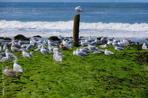 Aluminium Noordzee Möwen am Strand bei Schoorl/NL