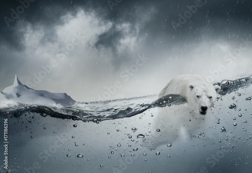 Fotobehang Ijsbeer Ours blanc polaire seul dans l'océan