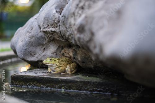 Fotobehang Kikker Green frog sitting sneak shelter under rocks.