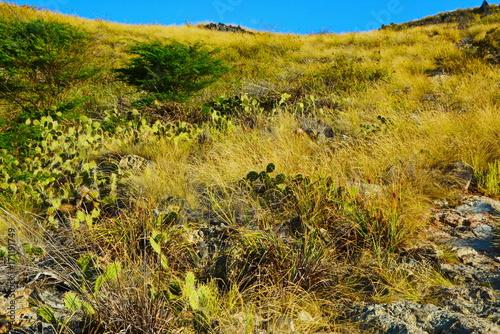 Fotobehang Honing forest, cacti, landscape, mountain, sky, nature,