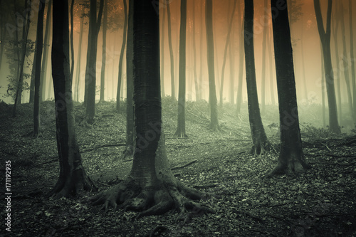 Fotobehang Olijf mysterious forest landscape with trees in fog