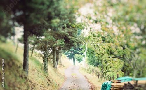 Fotobehang Weg in bos nature