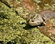 frog sits and basks in the sun