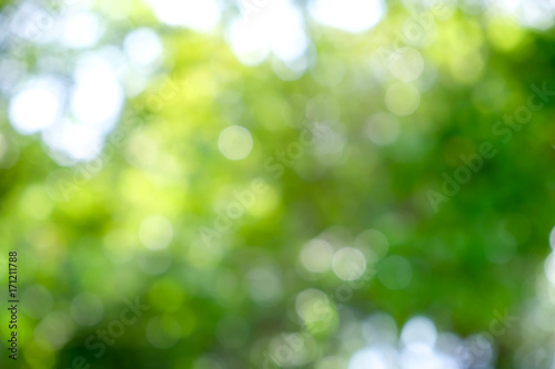 Keuken foto achterwand Paardebloemen en water abstract green bokeh Nature background