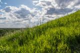 Fototapety Green grass  under clouds