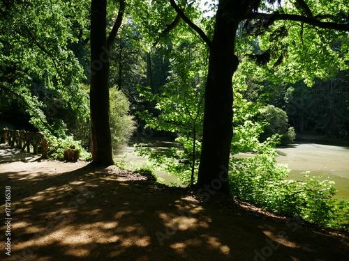 Fotobehang Weg in bos Parc du Reynou