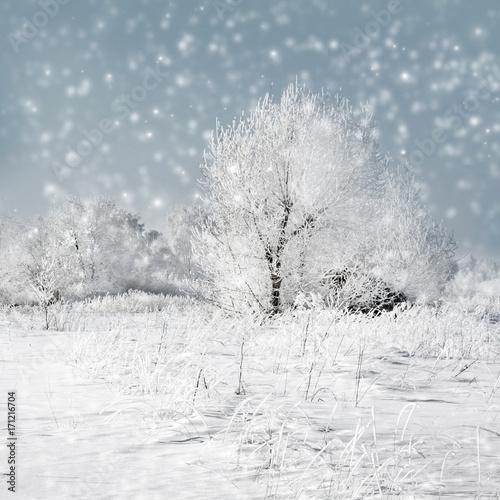 Fotobehang Donkergrijs Winter nature, snowstorm