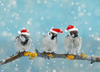 Christmas card with funny birds sitting on a branch in winter in the snow in a red festive hat