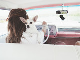 woman in car classic, with chihuahua