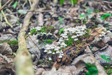 Small white Mushrooms in the Forest