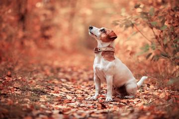 Dog at autumn