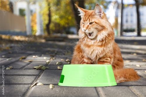 Obraz na płótnie Cat.
