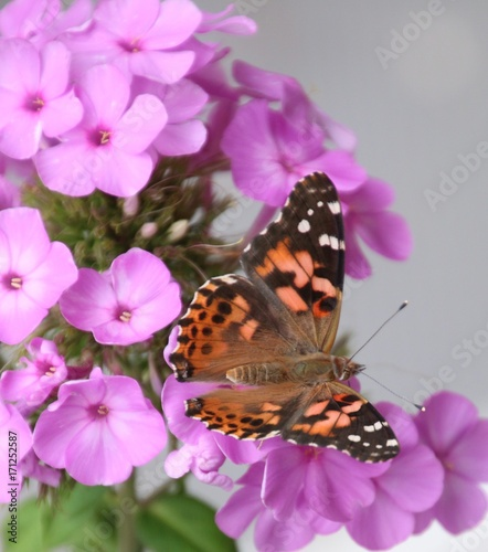 Aluminium Vlinder Monarch on purple flowers