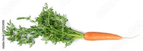 Poster Verse groenten Carrot.