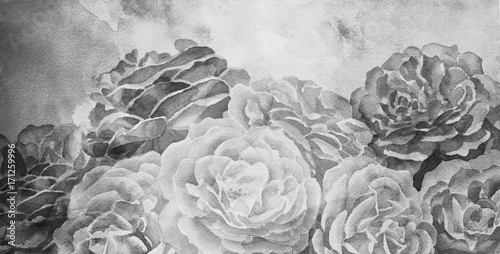 black and white roses in hand painted watercolor background design, romantic mood for wedding announcement or valentines day - 171259996