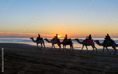 Fotobehang Kameel Camel caravan at beach at sunset Essaouira