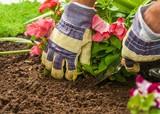 Gardening. - 171263504