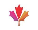 canada maple leaf icon image vector