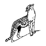 Silhouette drawing of a leopard up, on a white background.