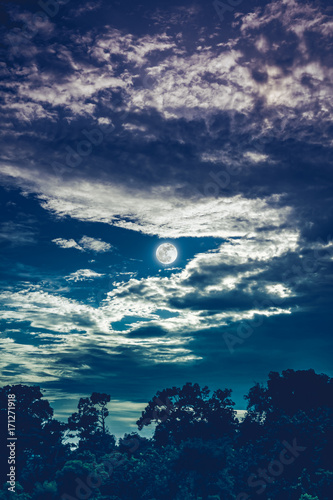 Papiers peints Bleu nuit Sky with clouds and moon above silhouettes of trees. Serenity nature background.