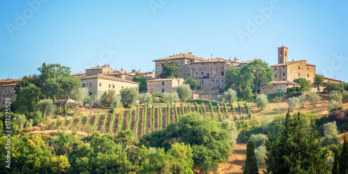 Vineyard and village of Montalcino, Tuscany, Italy
