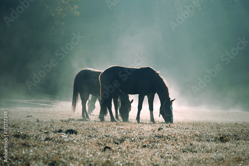 Magic mornig sunny light on countryside meadow field with free domestic brown horses. - 171277348