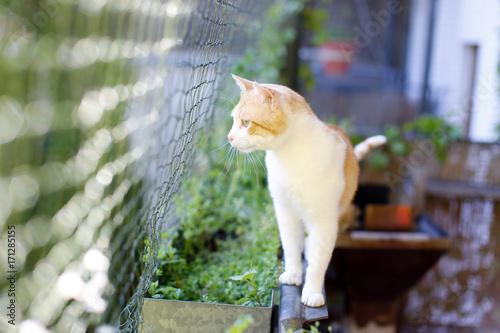 Katze auf katzensicherem Balkon mit Katzennetz Poster