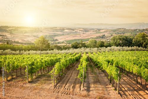 Aluminium Toscane Vineyard in Tuscany near Montepulciano, Italy