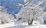 branches d'arbre recouvertes de neige près d'un village en montagne  - 171299780