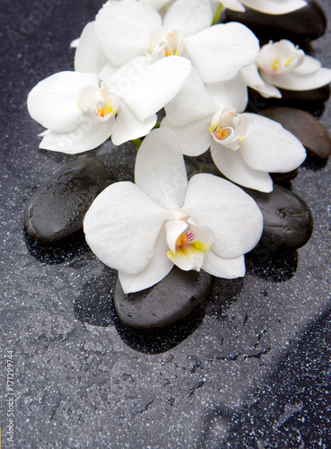 Zen stone and white orchid isolated.
