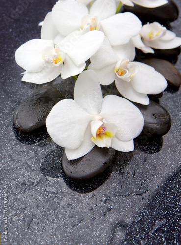 Papiers peints Zen Zen stone and white orchid isolated.