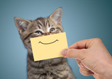 happy cat portrait with funny smile on cardboard - 171300389