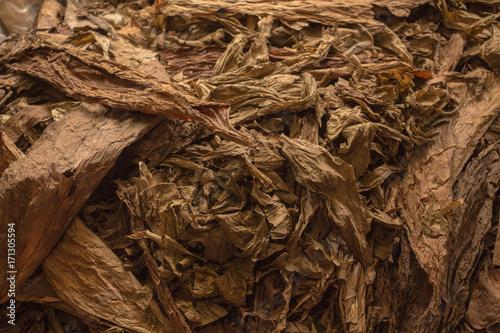 hojas de tabaco secas