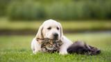 cute puppy an cat friendship - 171307127