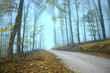Magic foggy mysterious gold colored autumn season forest road.