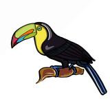 tukan bird
