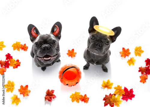Fotobehang Crazy dog halloween ghost dogs trick or treat