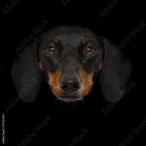Fotobehang Crazy dog dog isolated on black