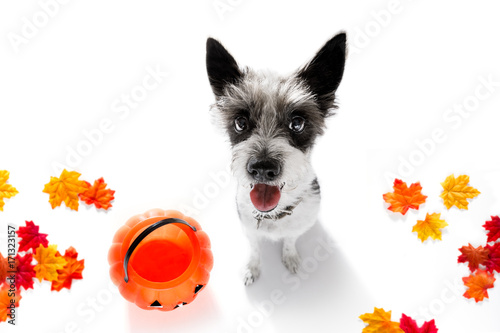 Fotobehang Crazy dog halloween ghost dog trick or treat